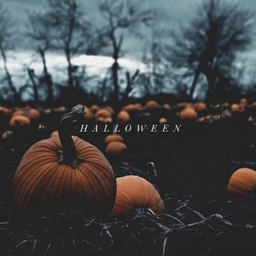 Halloween Pumpkin Patch Pictures Photos And Images For
