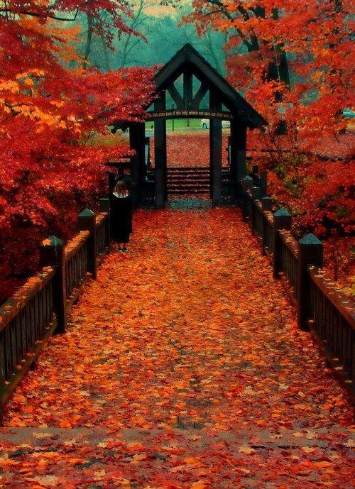 Cute Fall Wedding Ideas