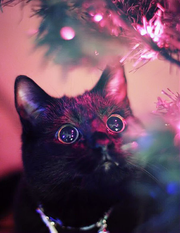 Christmas Cat Pictures Photos And Images For Facebook Tumblr Pinterest And Twitter