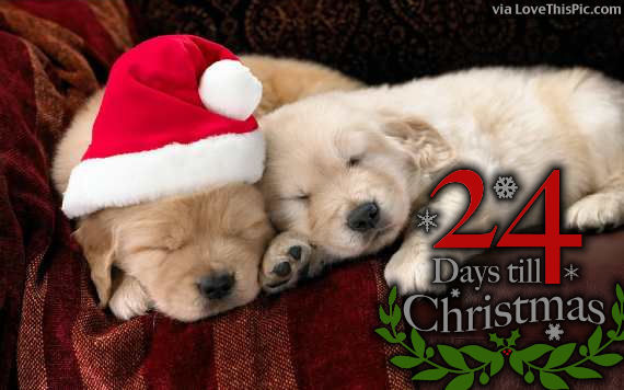 Only 24 Days Until Christmas Pictures Photos And Images