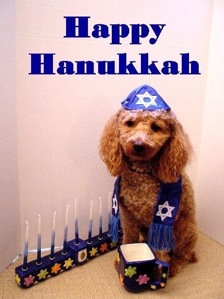 Cute Happy Hanukkah Quote For Friends Pictures Photos