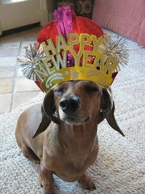 Dachshund New Year Pictures Photos And Images For