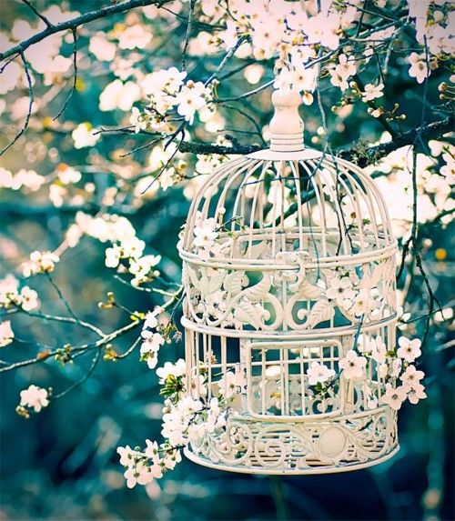 Image result for SPRING PHOTOGRAPHY TUMBLR