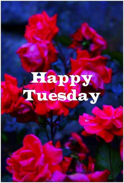 Happy Tuesday Pictures Photos And Images For Facebook