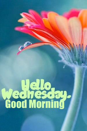Hello Wednesday Good Morning Pictures Photos And Images