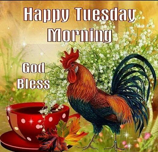 Rooster Happy Tuesday Morinng Pictures Photos And Images