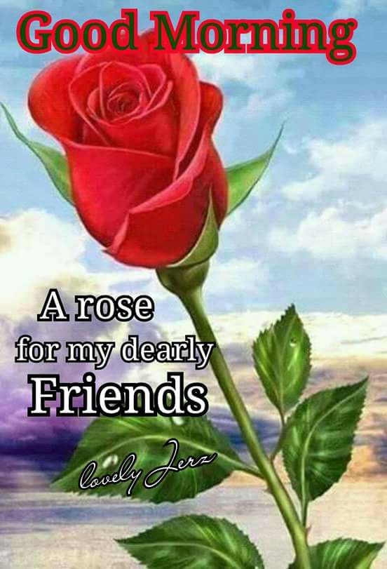 A Rose For My Dearly Friends Good Morning Pictures