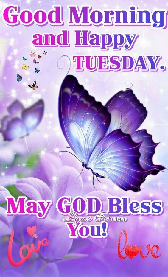 Good Morning And Happy Tuesday Pictures Photos And Images For Facebook Tumblr Pinterest And Twitter
