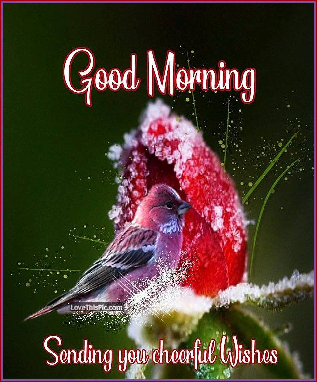 Good Morning Sending You Cheerful Wishes Pictures Photos And Images For Facebook Tumblr