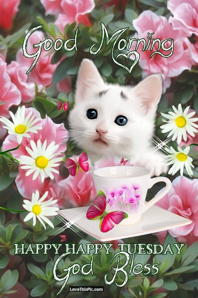 White Kitten Wishing You A Happy Tuesday Morning Pictures Photos And Images For Facebook