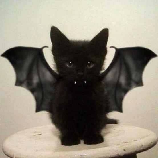 Cute Bat Cat Pictures Photos And Images For Facebook