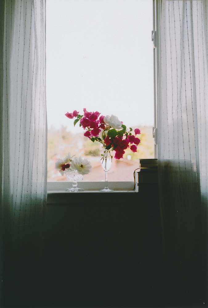 Flowers In The Window Pictures Photos And Images For