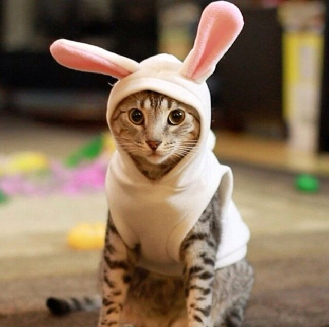 Cute Kitten In Bunny Outfit Pictures Photos And Images