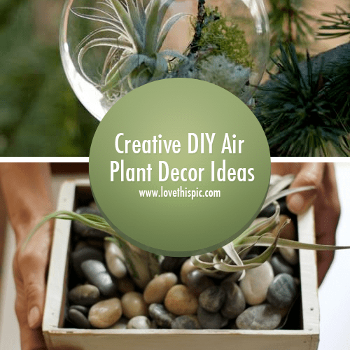 Creative DIY Air Plant Decor Ideas