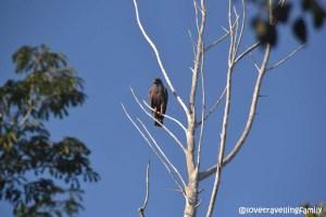 Ciénaga de Zapata, Cuba, Bird watching