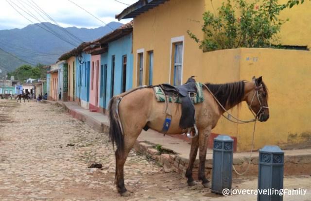 A horse in Barrio Los Tres Cruces, Trinidad, Cuba