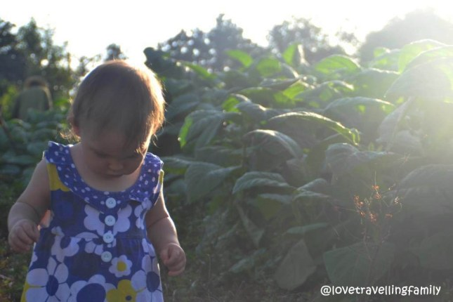 Tobacco fields Cuba | Love travelling family