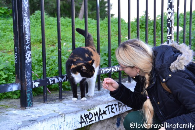 Cats in Athens, Greece