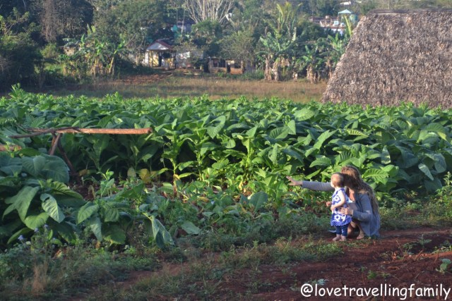 Viñales, Cuba with kids, Love travelling family