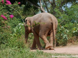 Best places to see elephants in Thailand. Elephants tours. Samui Elephant Sanctuary