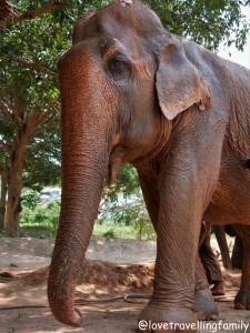 Best places to see elephants in Thailand. Elephants tours. Samui Elephant Sanctuary