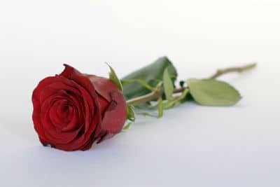 a ingle simple rose for your loved one on valentine's day