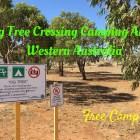 Fig Tree Crossing