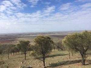 Mount Jeffcott Flora & Fauna