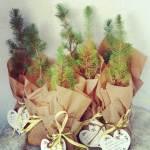 Plantitas personalizadas de regalo para los invitados