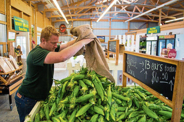 Greg Forejt Jr. dumps a bag of sweet corn into the sales bin at Windy Heights Farm Market in East Huntingdon Township on Friday, June 21, 2019.