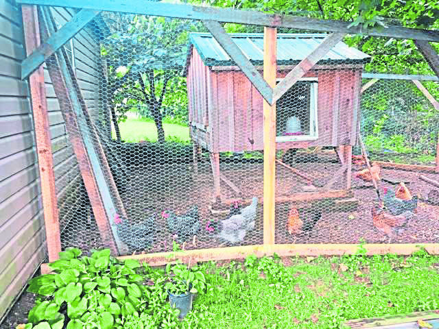 Chickens inside coop at an Irwin home last year.