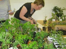 Bring & Take 2012 - Seedlings swap
