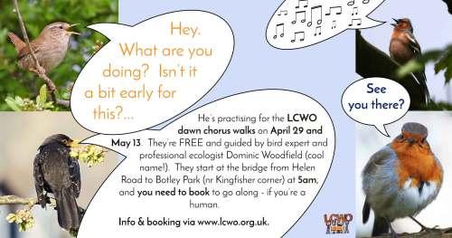 Dawn Chorus at Kingfisher Corner @ Kingfisher Corner (meet at bridge from Helen Road into Botley Park)