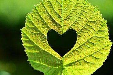 How we can help you actively combat your eco-anxiety