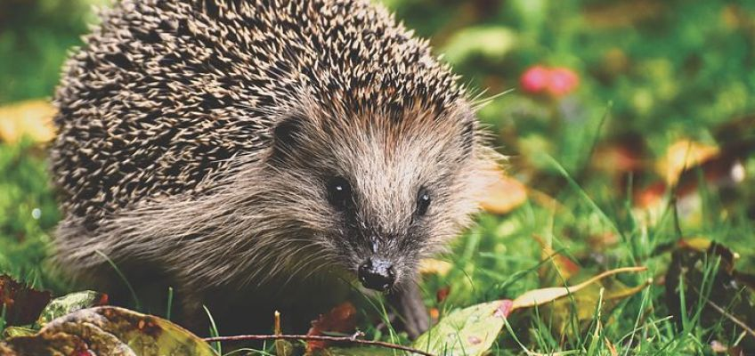 3 things you can do for local wildlife this weekend