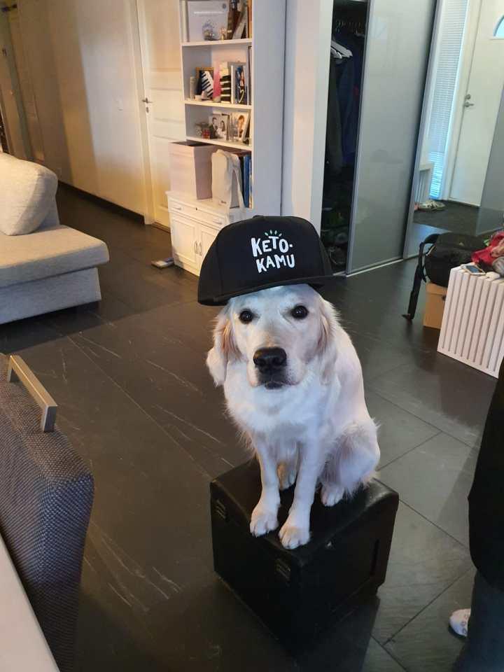 Ketokamu-koira