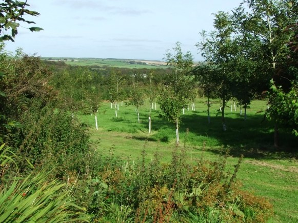 pic 11 surrounding trees and countryside