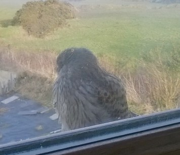 pic 32 visiting baby on our window cill