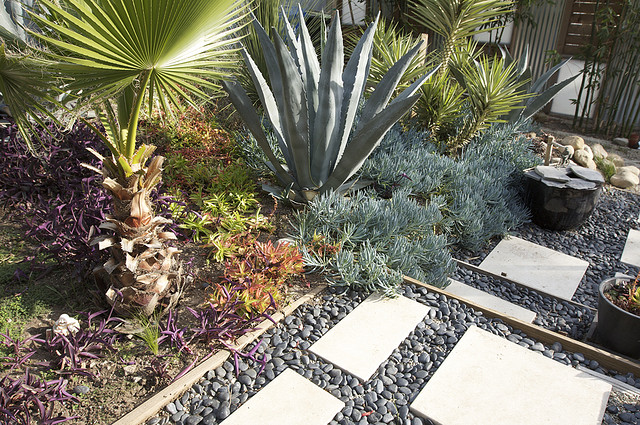 Xeriscape? Yes You Should!