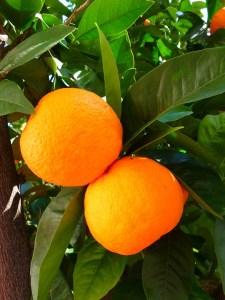 body_orange