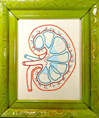 Framed Embroidered Kidney Anatomy Art, used under CC 2.0