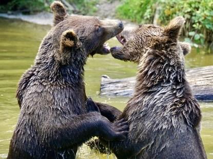 bear-2509774_640