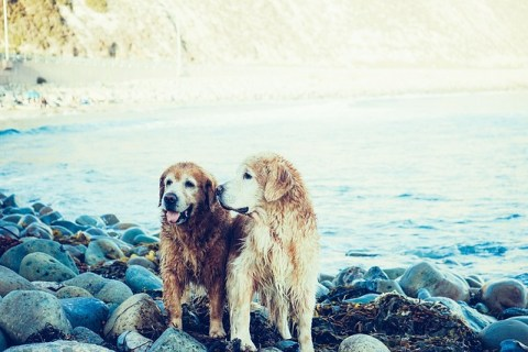 dogs-569016_640