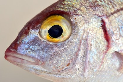 fish-2389131_640
