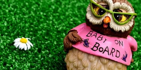 owl-2403148_640