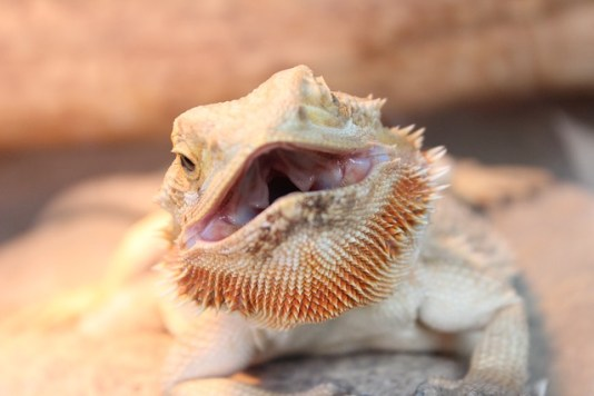 reptile-2506889_640