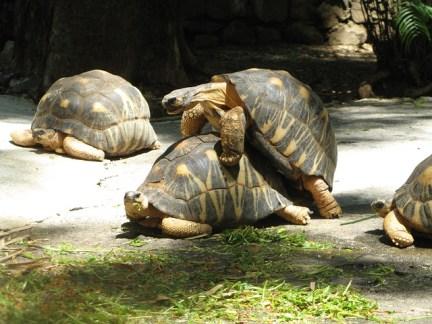 turtles-518810_640