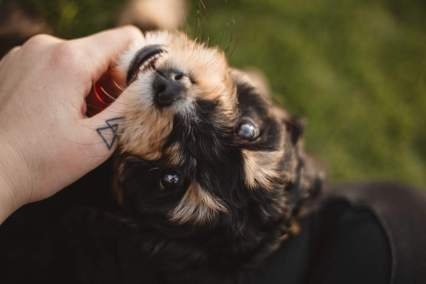 Thumb Tattoo and Cute Puppy