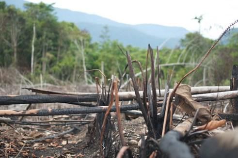 Stripped bare, Sarawak | source - http://bit.ly/jm0Znl