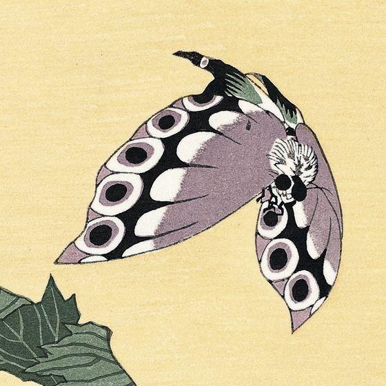 Papillon d'Hokusaï